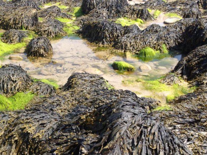 Ross Beach, Killala, Mayo. | Valkyriekerry and Declan Kelly