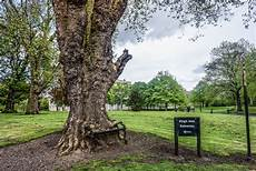 Hungry Tree at King's Inns Dublin 2015 by William Murphy | https://commons.wikimedia.org/wiki/File:Hungry_Tree_at_King%E2%80%99s_Inns,_Dublin-17565181402.jpg