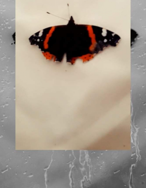 Butterfly in Ballinrobe | Emily Land