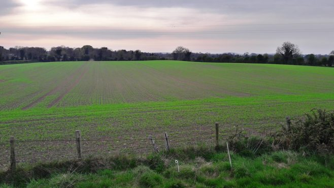 Moated site in Cutbush, Co. Kildare | Site as viewed in 2020