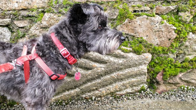 Hidden in Plain Sight – a Medieval Architectural Fragment at Marlfield | Peig the Barkaeologist with her latest discovery