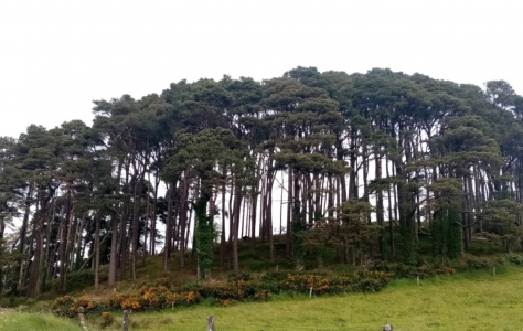 Ballyriggin Wood