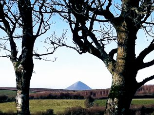 A stunning, triangular image of Croagh Patrick looking west through the trees from Thomas Larkin's ancestral homestead.  | Michael Larkin