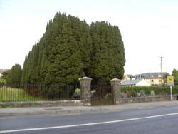 Holy Trinity Cemetery , Westport. Co. Mayo | Image by Dympna Joyce.