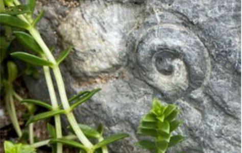Fenit - A Fossil Walk