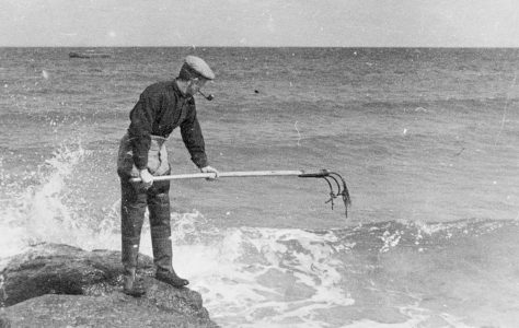 Seaweed harvesting - the tools of the trade