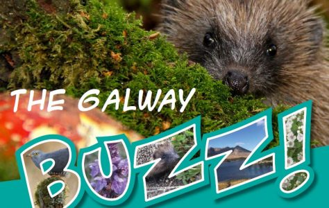 The Galway Buzz - Buzz na Gaillimhe