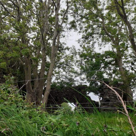 Ashbrook House Ruins   Noelene Beckett Crowe