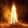 May Fires & May Bush
