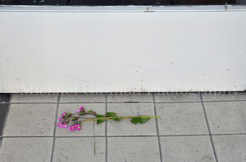 Flowers on doorstep | Michael Gannon