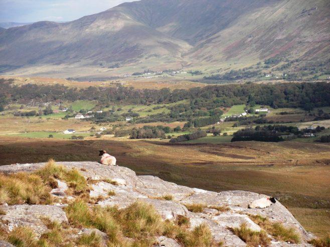 Corcóg Hill | Patrica Keane