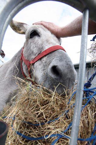 Heritage Week: Donkey Day   National Museum of Ireland