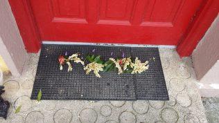 Flowers on doorstep | Eugenia O'Reilly