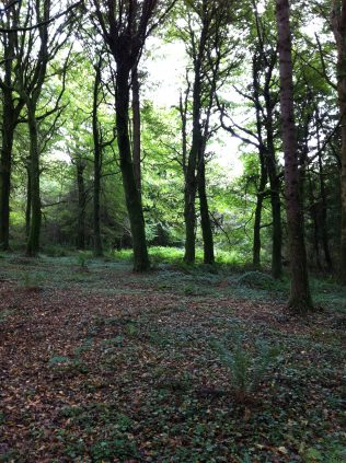 Open glades allow sunlight to reach the woodland floor increasing diversity | Lorna Elms