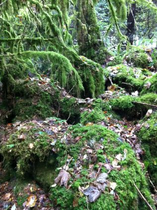 Mosses & lichens give a prehistoric feel to Drummin | Lorna Elms