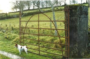 Ronnie could sniff out a well constructed gate... ! | Tom Doyle