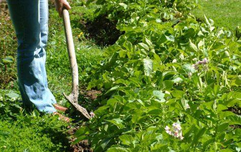 Mayo Organic Group Garden Trail
