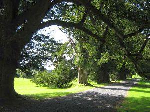 Yew Walk Lough Crew Garden, Oldcastle. Co. Meath | www.treecouncil.ie