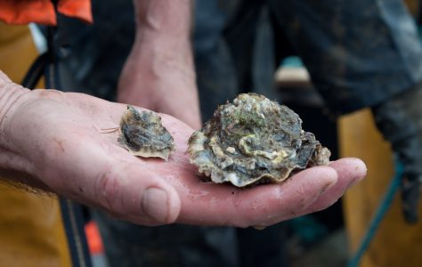 It's All About The Oyster