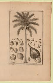 Image by Botanist Patrick Brown | www.brown.edu