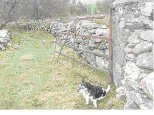 Gate image sent in by Susie Sullivan, Derraun, Co Mayo