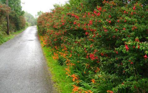 Slea Head Drive, The Dingle Peninsula.