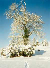 A Winter Scene of the infamous Burial Plot | www.ballintubber.ie